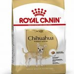 royal canin chihuahuas