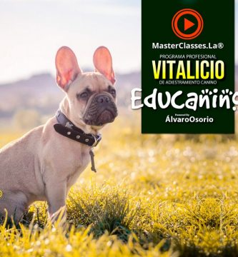 curso adiestramiento canino