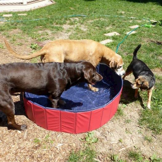 limpieza piscina perros